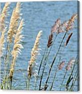 Pampas On The Lake Canvas Print