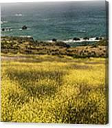 Panarama Spring On Califronia Coast By Denise Dube Canvas Print