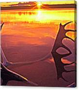 Panorama Caribou Antlers Whitefish Lake Nwt Canada Canvas Print