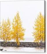 Panorama Tree Canvas Print