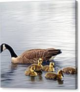 Panoramic Goose Family Outing Canvas Print