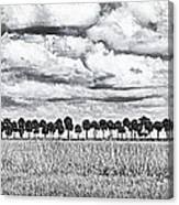 Panoramic Noir Canvas Print