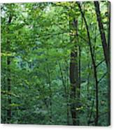 Panoramic Shot With Green Trees Canvas Print
