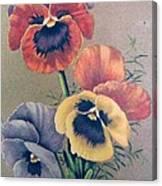 Pansies Bouquet Canvas Print