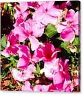 Pansies Garden Canvas Print