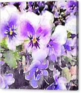 Pansies Watercolor Canvas Print