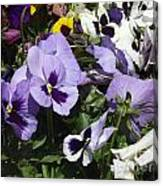 Pansy Canvas Print