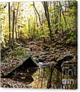 Panther Branch In Fall Canvas Print
