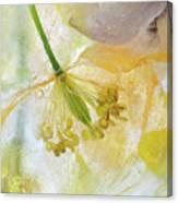 Papaver Ice Canvas Print