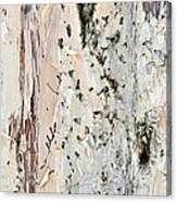 Paper Bark Astract Canvas Print