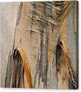 Paper Bark Canvas Print