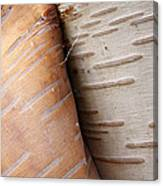 Paper Birch Bark Canvas Print