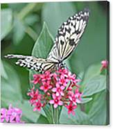 Paper Kite Butterfly - 2 Canvas Print
