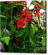 Paper Kite Butterfly II Canvas Print