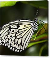 Paper Kite Butterfly On A Leaf  Canvas Print