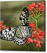 Paper Kite Canvas Print