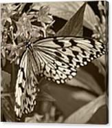 Paper Kite On Frangipani Flowers Canvas Print