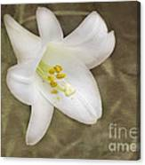 Paper Lily Canvas Print