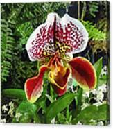 Paph Fiordland Sunset Orchid Canvas Print