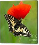 Papilio Machaon Butterfly Sitting On A Red Poppy Canvas Print