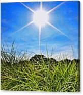 Papyrus In The Sun Canvas Print