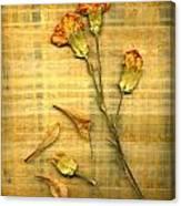 Papyrus2 Canvas Print
