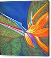 Paradise Pastel Canvas Print