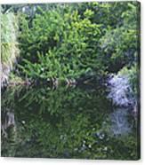 Paradise Pond Canvas Print