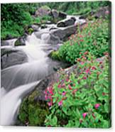 Paradise River And Spring Wildflowers Canvas Print