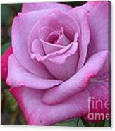 Paradise Rose Canvas Print