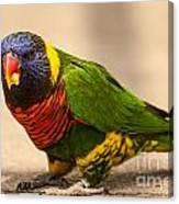 Parakeet With Treat Canvas Print