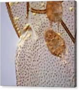 Parasitic Mites 501 Canvas Print