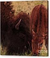 Parent With Newborn Calf Bison Canvas Print