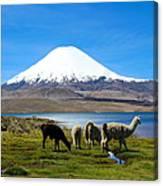 Parinacota Volcano Lake Chungara Chile Canvas Print