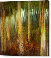 Park #8. Memory Of Trees Canvas Print