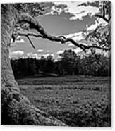 Park In Black And White Canvas Print