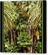 Park Palms Canvas Print