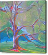 Park Trees 8 Canvas Print