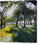 Park Trees Canvas Print