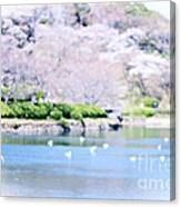 Park With Pond And Cherry Blossoms In Spring Canvas Print