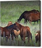 Parker Ranch Horses Canvas Print