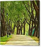 Parkway Among Trees Canvas Print