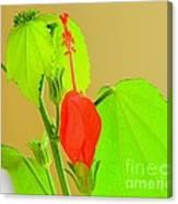 Parlor Maple Flower Canvas Print