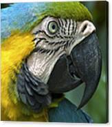 Parrot 9 Canvas Print
