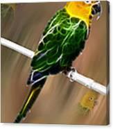 Parrot Beauty Digital Artwork Canvas Print