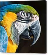 Parrot Close Up Canvas Print