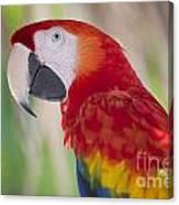 Parrot On Isla Tortuga-207 Canvas Print