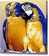 Parrot Passion 1 Canvas Print