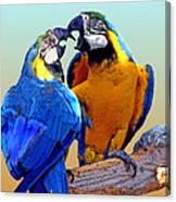 Parrot Passion 2 Canvas Print