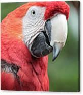 Parrot Profile Canvas Print